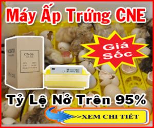 báo giá máy ấp trứng cne 2020